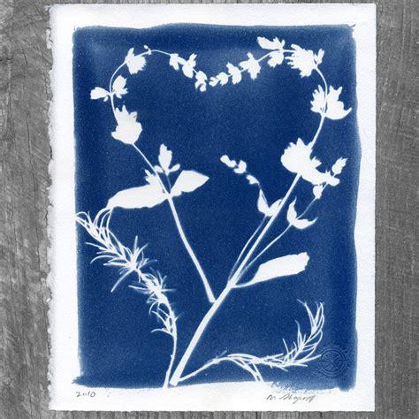 cyanotype research photo 2 portfolio rosanna wong