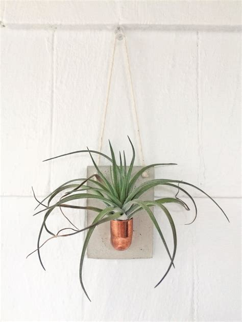 Air Plant Wall Holder by Copper And Concrete Wall Planter Air Plant Holder