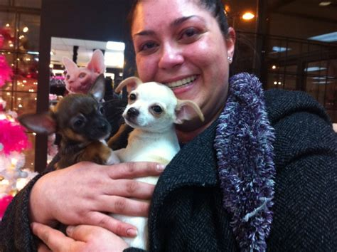 Expensive Lava L by Expensive Puppies Stolen From Laval Pet Store Rescued