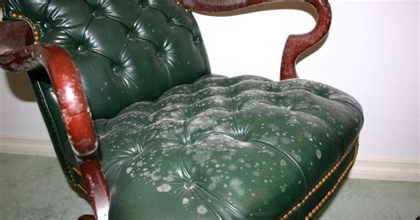 how to clean mold from upholstery remove all stains com how to remove mold from leather