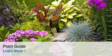 Shop The Lowe S Garden Center For All Your Gardening Needs Lowes Garden Center Flowers