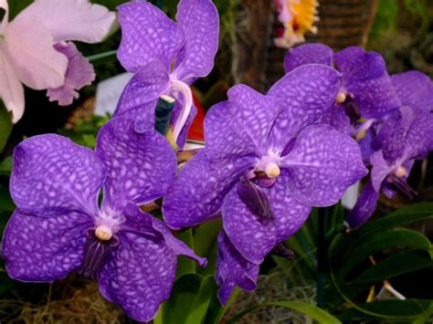 types of purple purple orchids types orchid flowers