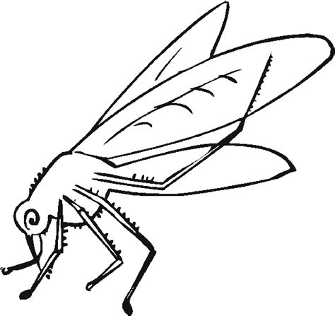 mosquito printable coloring pages