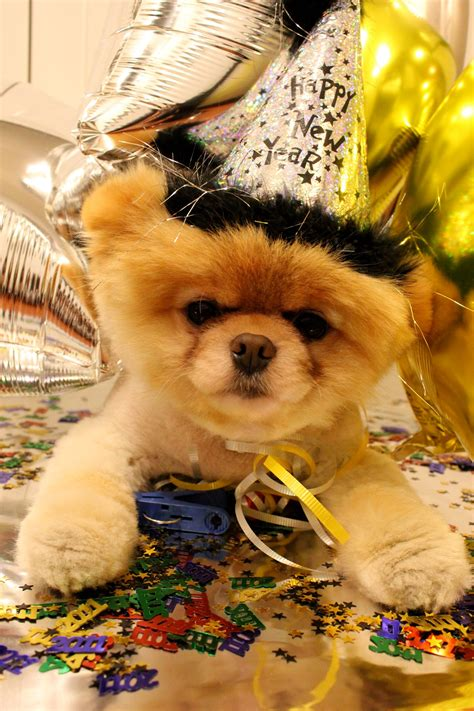 new year animal birthday boo the pictures and live instagram updates