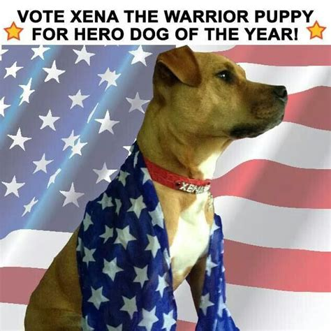 xena the warrior puppy 2075 best images about pittie don t judge on rescue dogs american