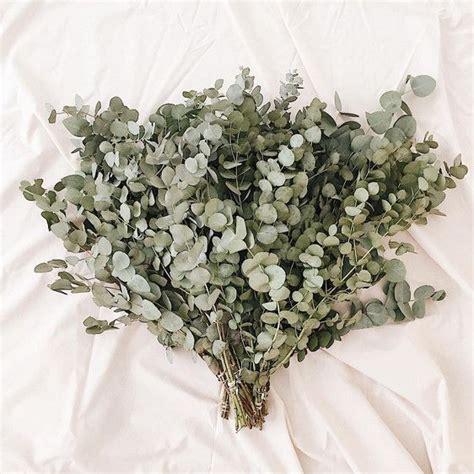 Eukalyptus Pflanze Kaufen 97 by Die Besten 25 Eukalyptus Hochzeit Ideen Auf