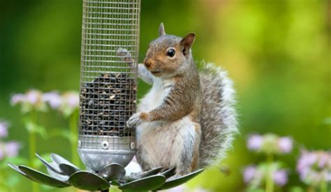 can you stop squirrels from stealing your bird feed