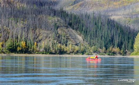 yukon canoes 4 day canoe trip in yukon yukon river nature tours