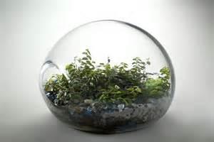 terrarium containers plastic images