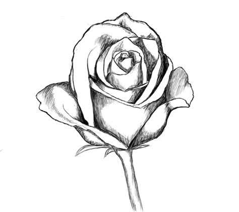 how to draw doodle roses drawings clipart best