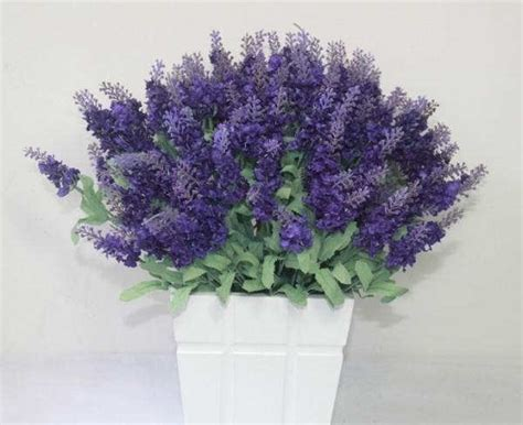 menanam bunga lavender tanaman hias bunga buah