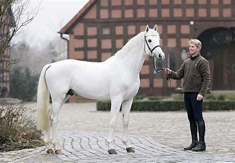 E M O R Y Esmonia 09 03 d145 florian meyer zu portraits jacques toffi fotograf photographer