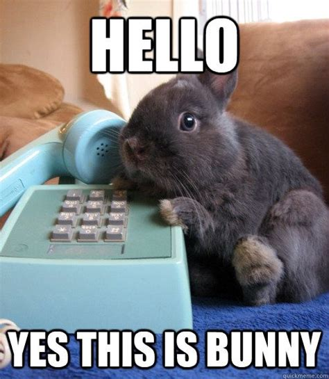 Cute Easter Meme - hello yes this is bunny i laugh really loud