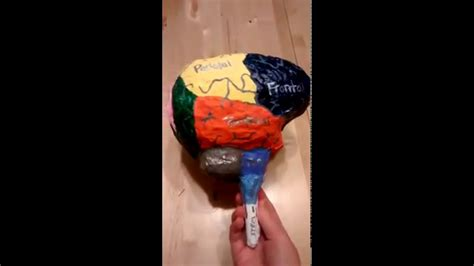 How To Make A Paper Brain - paper mache brain model