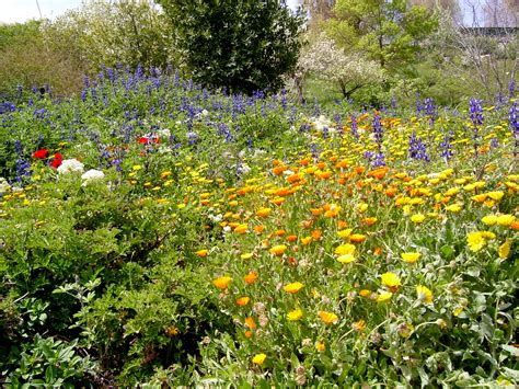 Jerusalem Botanical Gardens Jerusalem Botanical Gardens Photo Gallery