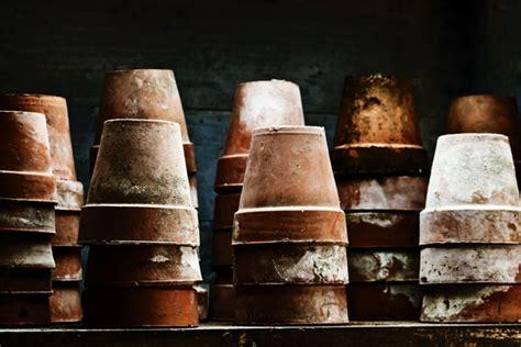 flower pots  stock photo public domain pictures