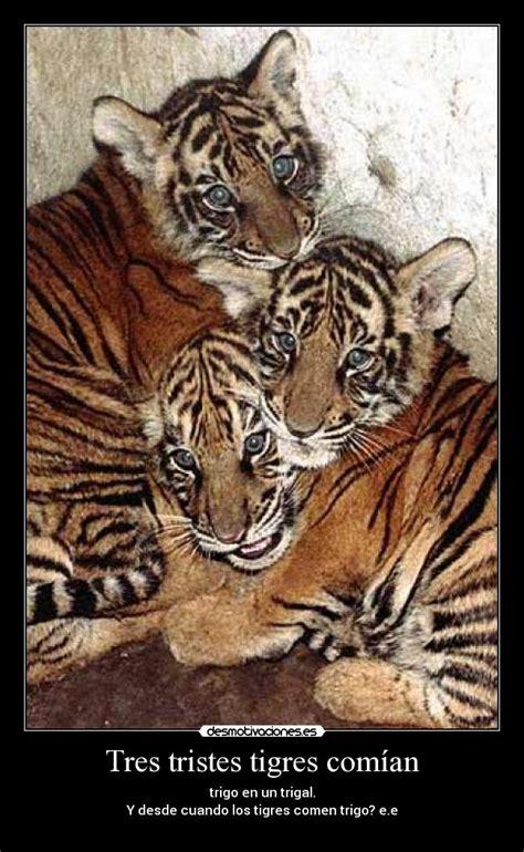 imagenes de tres tristes tigres im 225 genes y carteles de tigres pag 8 desmotivaciones