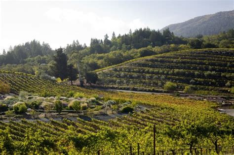 Top Mba Programs In Northern California by The Best Wineries To Visit In Northern California