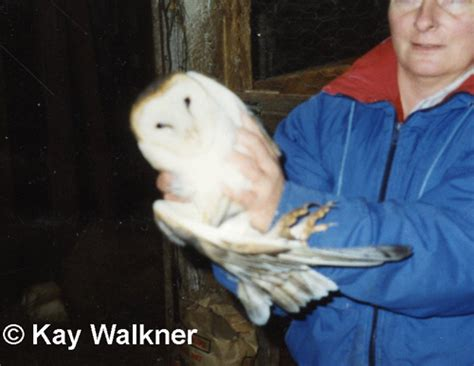 Delta County Records Barn Owl Michigan Bird Records Committee