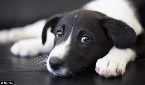 puppy cry s true best friend dogs really do console us when we cry and they treat