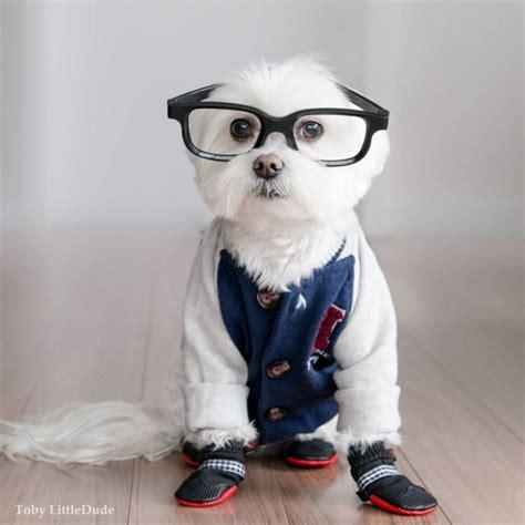 imagenes hipster graciosas toby el perro hipster que lo peta en instagram