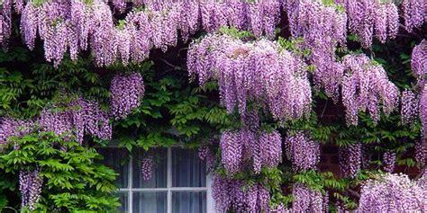 cespugli da giardino fioriti 5 arbusti meravigliosi per il vostro giardino best5 it