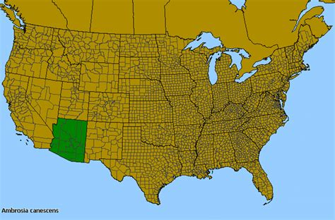 ragweed map usa ragweed ambrosia canescens species details and