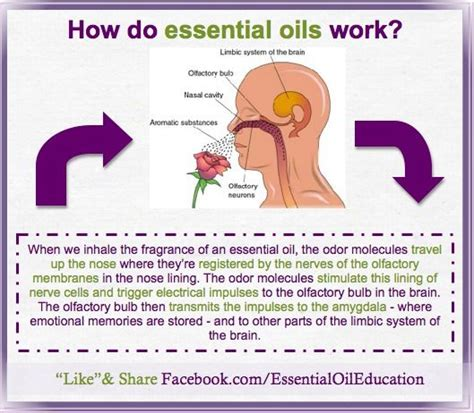 how to use essential oils to scent a room why do essential oils work to alleviate stress anxiety and a variety of other wellness