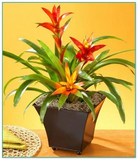 flowering house plants tropical flowering house plants