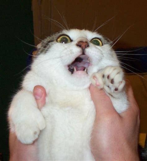 scared of cat scared cat picture ebaum s world