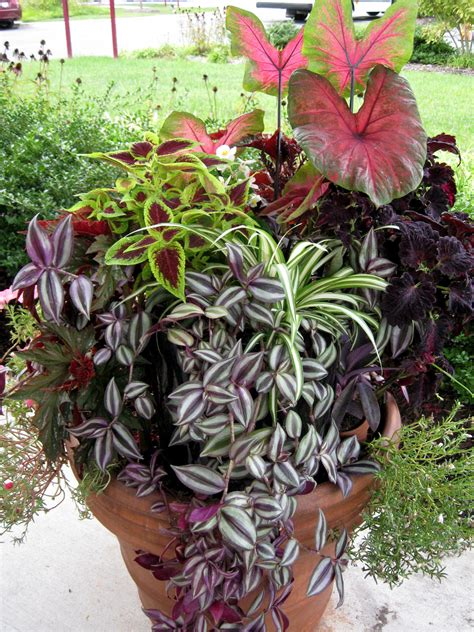 partial shade container garden indoor tropicals and