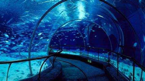 shanghai ocean aquarium crossley architects