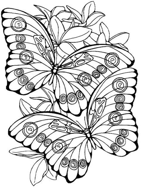 vlinder adult coloring pages pinterest