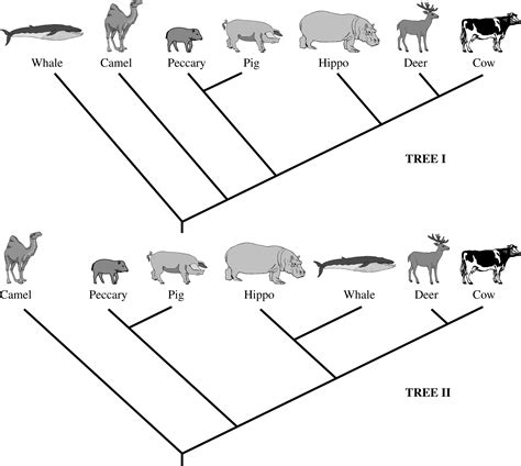 whale evolution data answer key untitled 1 local brookings k12 sd us