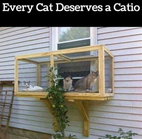 how to keep cats out of a room best 25 cat window ideas on cat hammock cat stuff and cat things