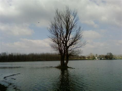 Free Images Tree Water free picture alone tree water