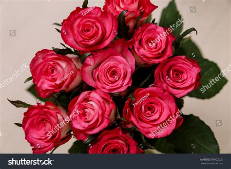 Official S Day Flower Pink Roses Background Valentines Day 8 Stock Photo