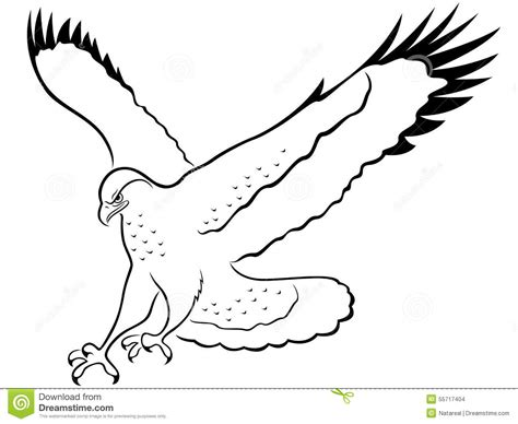 Black Hawk Outline by Hawk Outline Drawing Www Imgkid The Image Kid Has It
