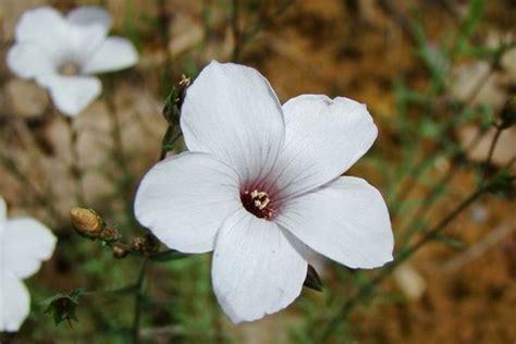 jean yves genet les fleurs sauvages de jean yves de houilles page 2