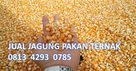 Distributor Jagung Pakan Ternak jual jagung pakan ternak 081342930785 supplier jagung