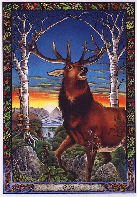 the druid animal oracle lrs the druid animal oracle painted by bill worthington stag image only