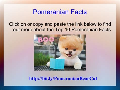 pomeranian facts pomeranian facts