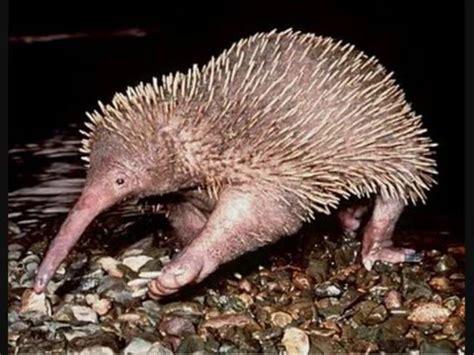 imagenes de animales jamas vistos increible mira los animales mas feos y raros del mundo