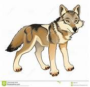Wolf Clipart Lobo  Pencil And In Color