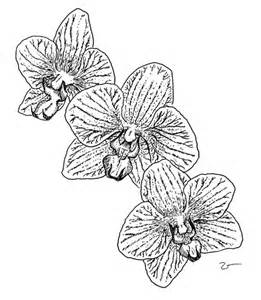 coloring pages for kids orchid flower coloring page