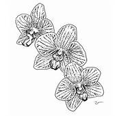 Coloring Pages For Kids Orchid Flower Page