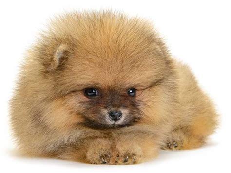 puppy photos 2048