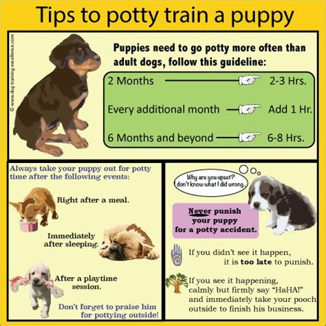 25 Best Ideas About Puppy Training Schedule On Pinterest