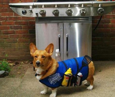 summer barbecues     safe   pet