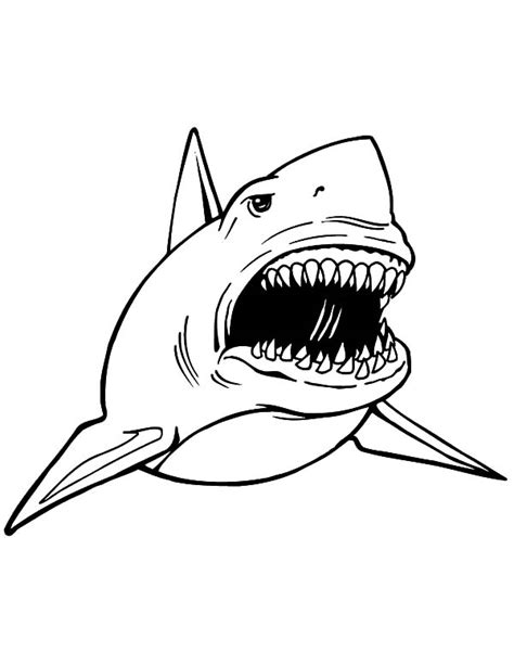 printable pictures great white sharks great white shark outline